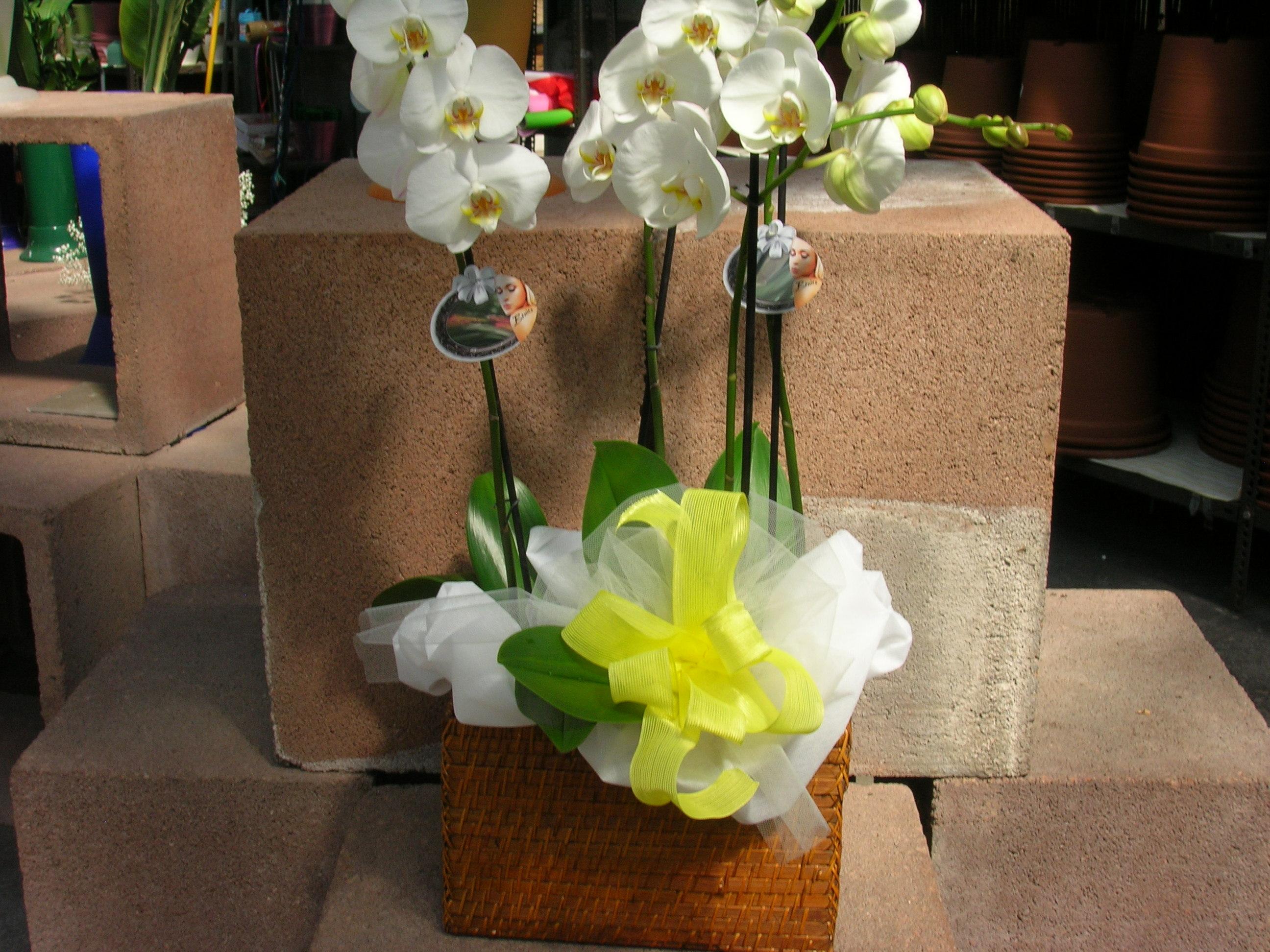 Composizioni regalo con piante e fiori recisi - Piante regalo ...